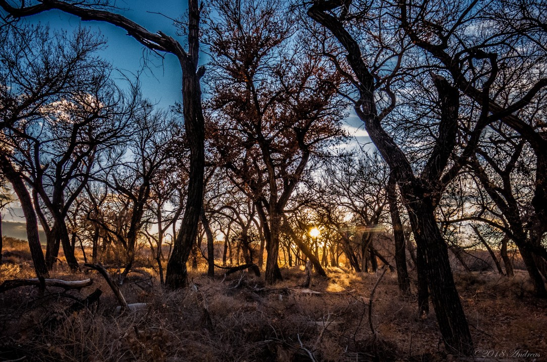 Willow Creek Bosque 2_18_18 f